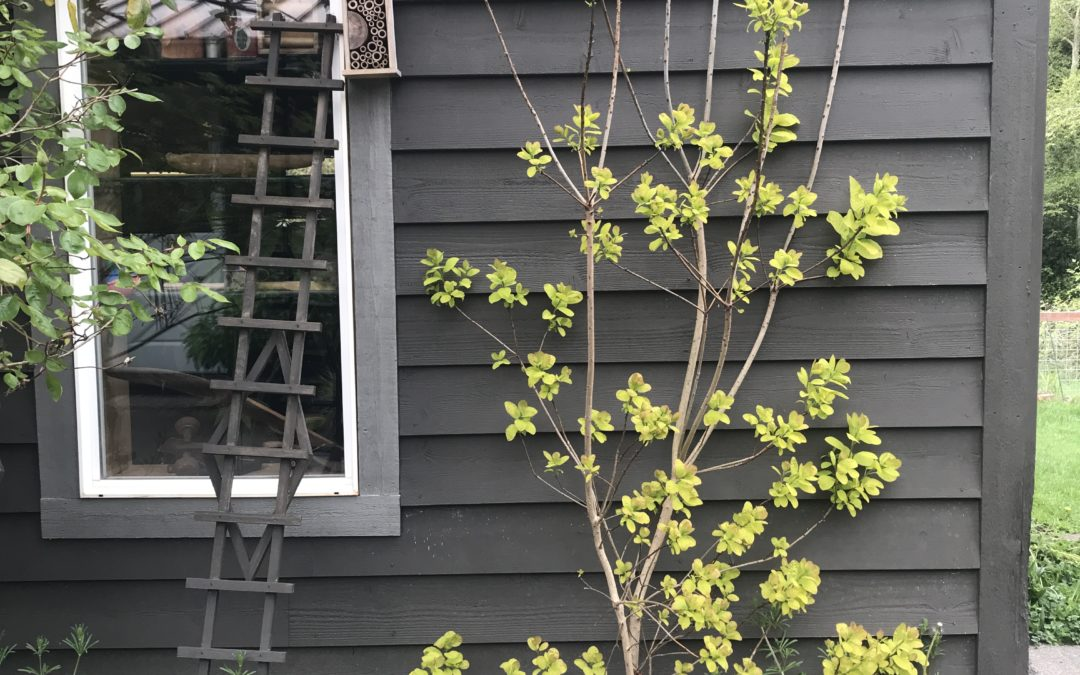 An image of springtime in our yard. A lime green tree against a dark gray building is budding out. Below it purple flowers in green are blooming.